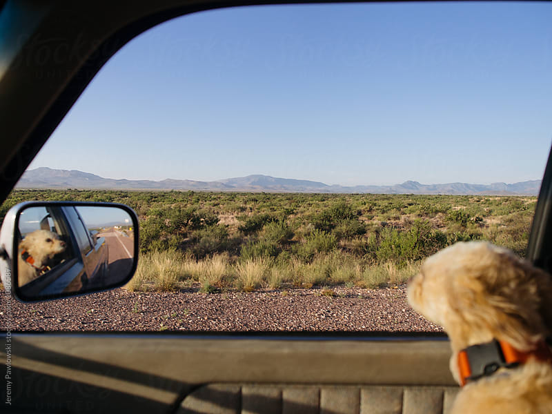 Small terrier dog with head out window during summer road trip by Jeremy Pawlowski for Stocksy United