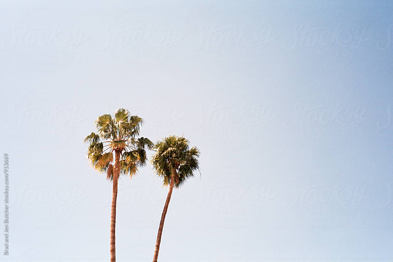 Palm Trees by Brad and Jen Butcher for Stocksy United