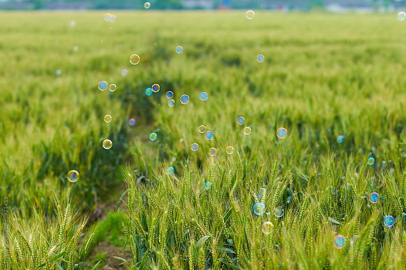 soap bubble flying over wheat field by Bo Bo for Stocksy United