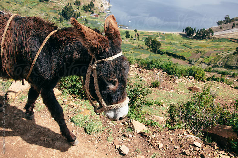 Donkey on lake landscape by Alejandro Moreno de Carlos for Stocksy United