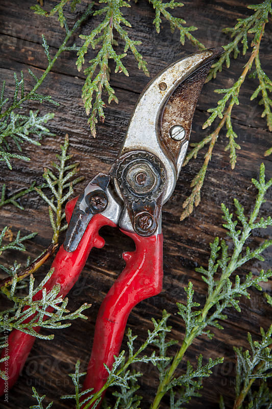 Gardening pruners by Jon Rodriguez for Stocksy United