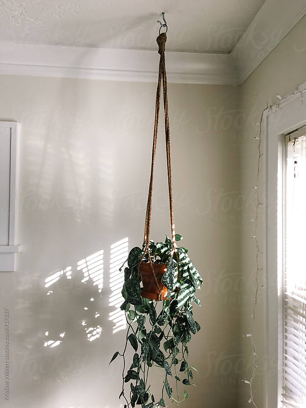 Plan hanging in home by Kristine Weilert for Stocksy United