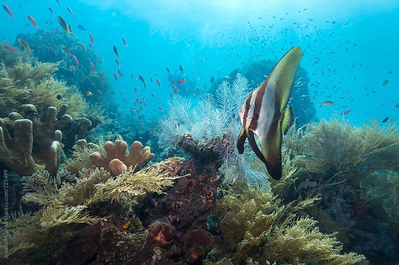 Scuba Diver exploring underwater world of Bali by Jovana Milanko for Stocksy United