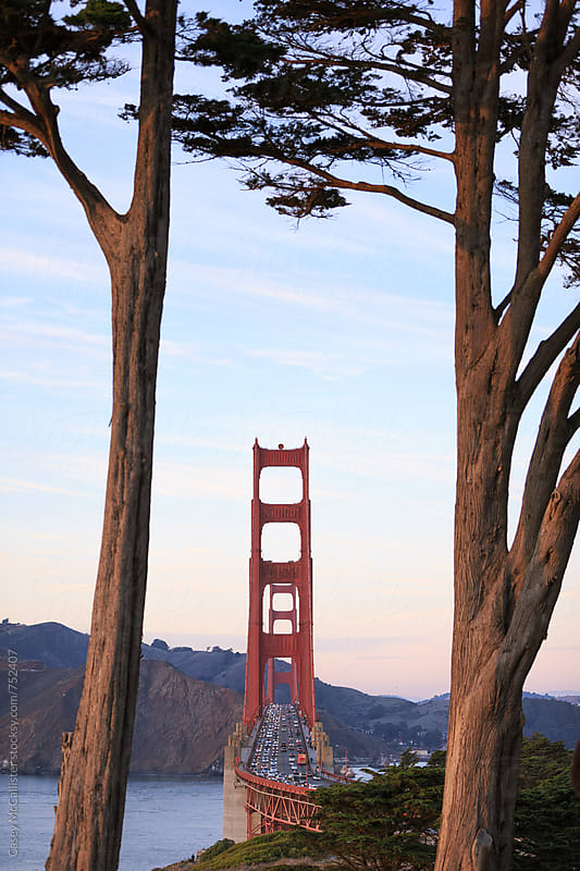 Two Trees and the Golden Gate Bridge by Casey McCallister for Stocksy United