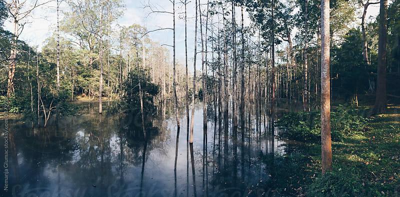 Trees Rising From the Swamp in Angkor Wat by Nemanja Glumac for Stocksy United