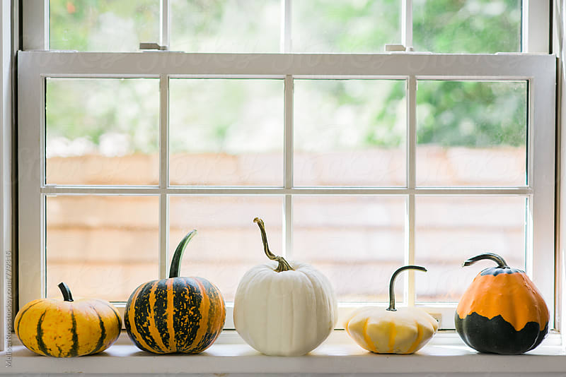 Various pumpkins and gourds displayed on a windowsill by Melissa Ross for Stocksy United