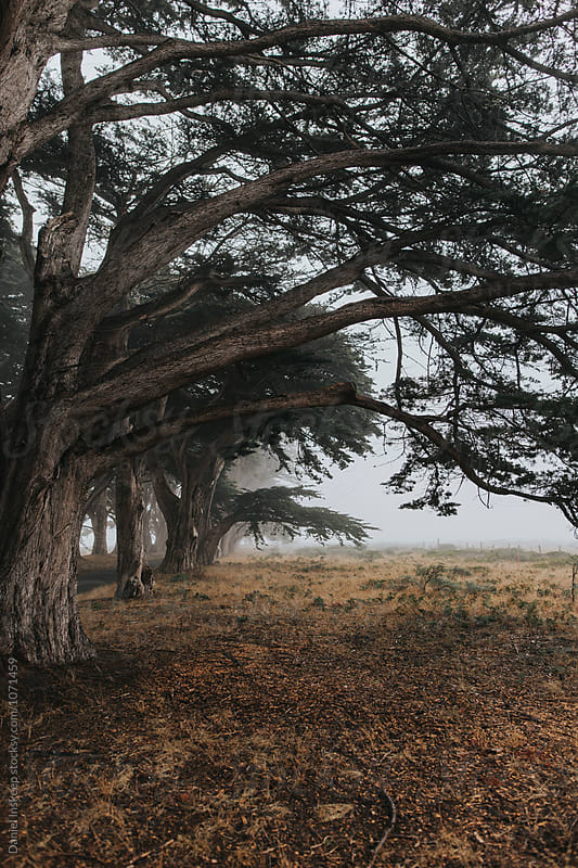 Trees in the Fog by Daniel Inskeep for Stocksy United