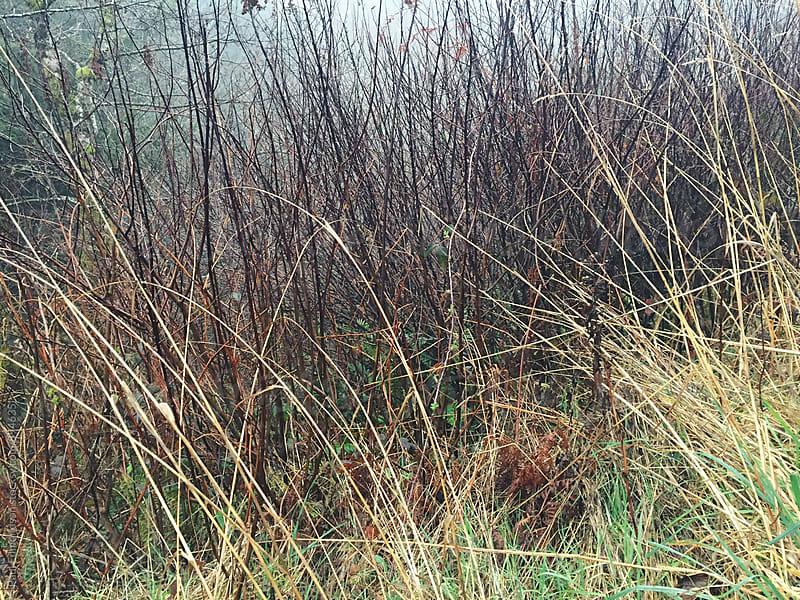 Grasses and tree shrubs along the Oregon coat by Paul Edmondson for Stocksy United