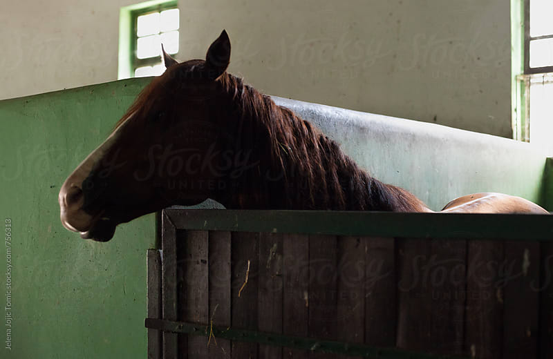 Stable horses by Jelena Jojic Tomic for Stocksy United