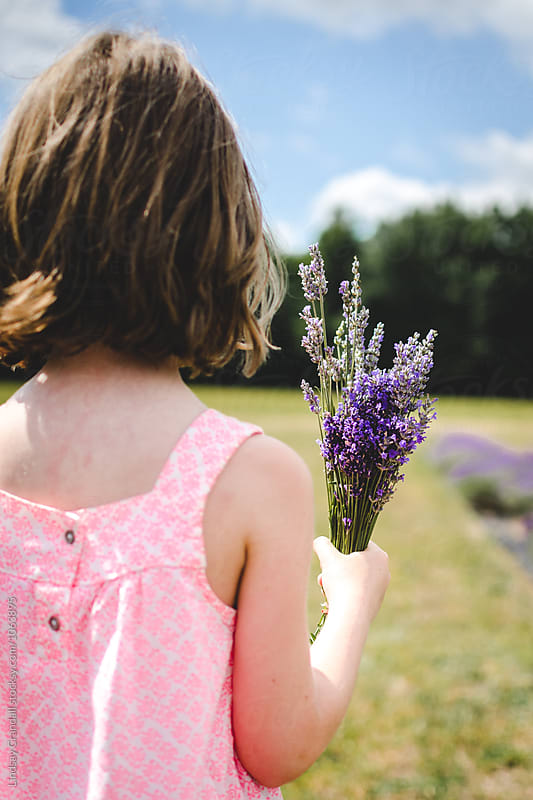 Young girl holding a bunch of freshly cut lavender by Lindsay Crandall for Stocksy United