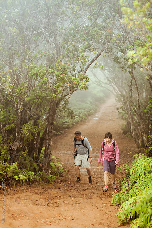 Cloud Forest Trail Hikers by Willie Dalton for Stocksy United