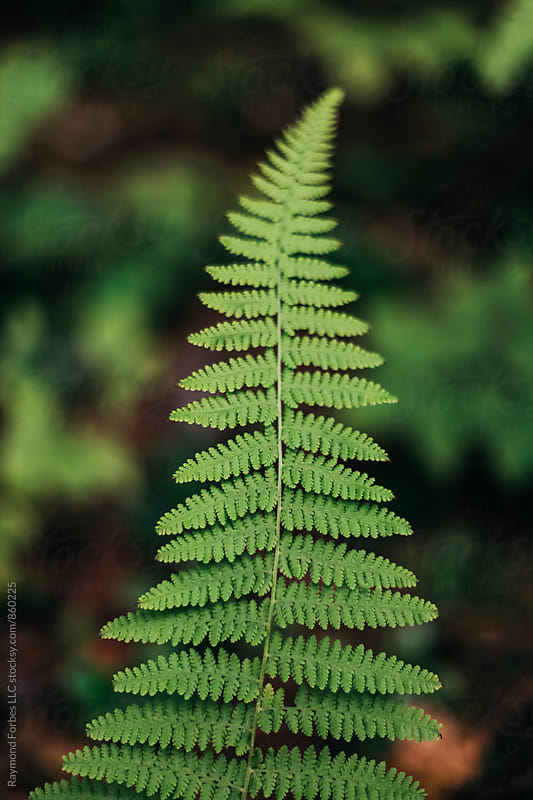 Fern by the side of the Road by Raymond Forbes LLC for Stocksy United