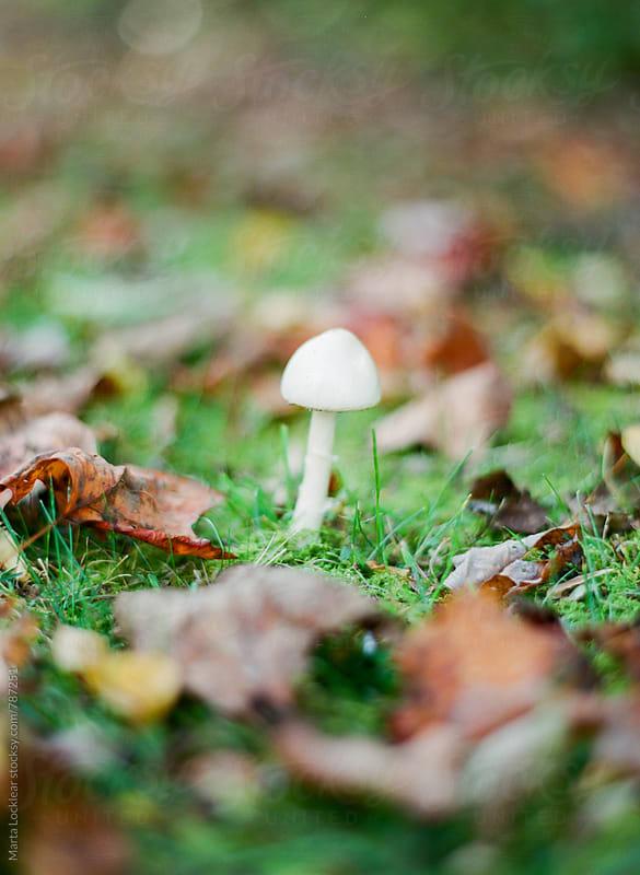 Mushroom in the Wild by Marta Locklear for Stocksy United