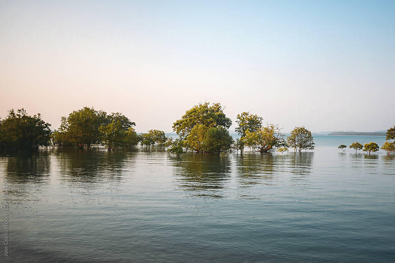 Trees into the sea. by Jose Coello for Stocksy United