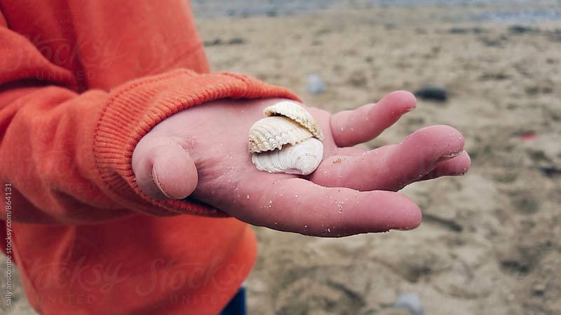 Childs hand holding shells on the beach by sally anscombe for Stocksy United