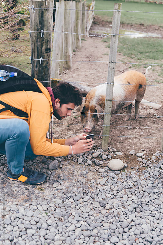 Showing photos to a piggy by Andrey Pavlov for Stocksy United