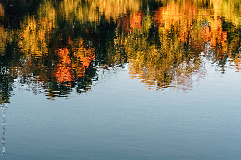 reflection of colorful autumn leaves in a pond by Deirdre Malfatto for Stocksy United