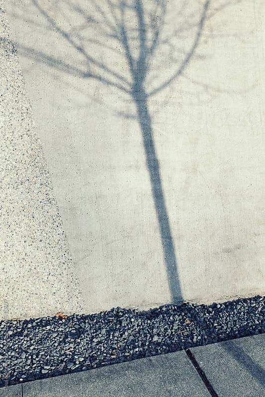 Shadow of small tree on urban sidewalk and wall by Paul Edmondson for Stocksy United