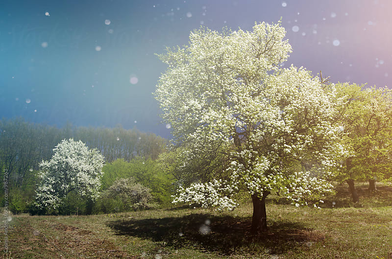 Spring with trees in bloom in fantasy fairy tale landscape by Cosma Andrei for Stocksy United