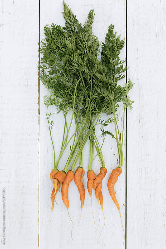 Homegrown organic carrots by Amy Covington for Stocksy United
