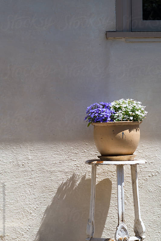 Flower planter in sunlight by Rowena Naylor for Stocksy United
