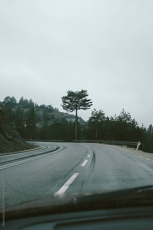Pine Tree Alongside of the Wet Road by Nemanja Glumac for Stocksy United