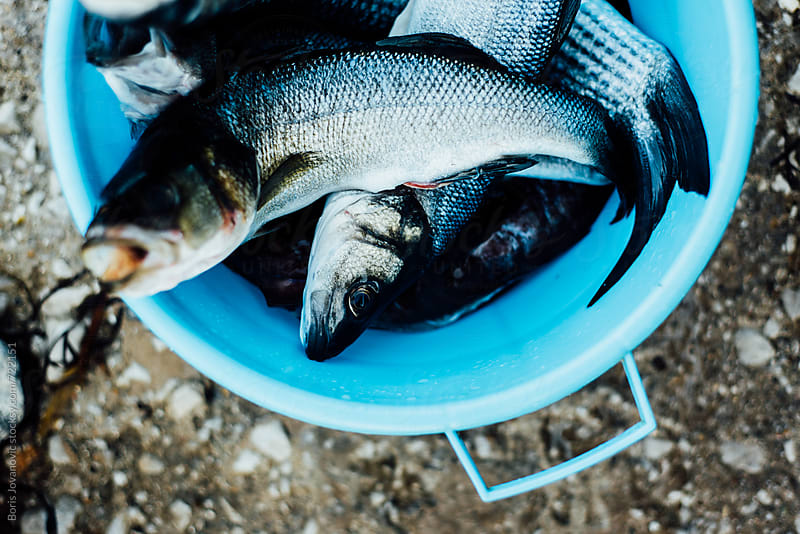 Fresh fish in the blue dish by Boris Jovanovic for Stocksy United