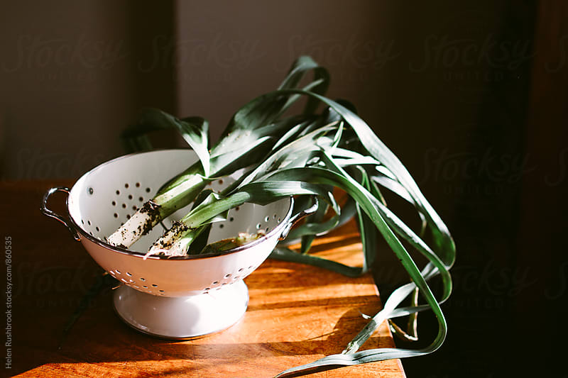 Fresh organic baby leeks in a colander on a sunny table. by Helen Rushbrook for Stocksy United
