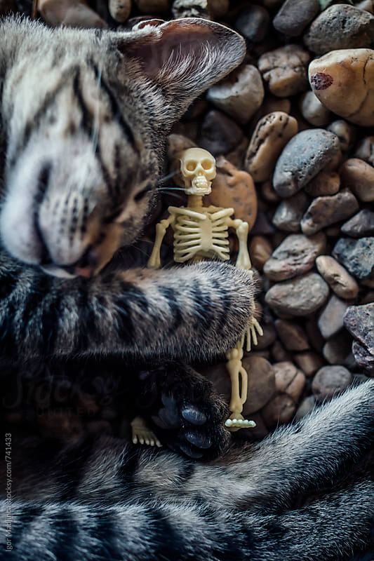 cat and skeleton sleeping on a rocky beach,Halloween by Igor Madjinca for Stocksy United