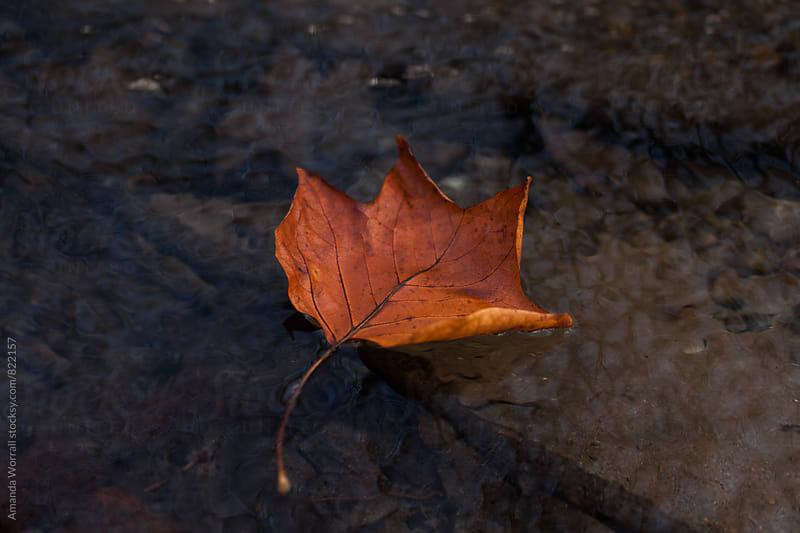 An red/orange autumn leaf floating in a river by Amanda Worrall for Stocksy United