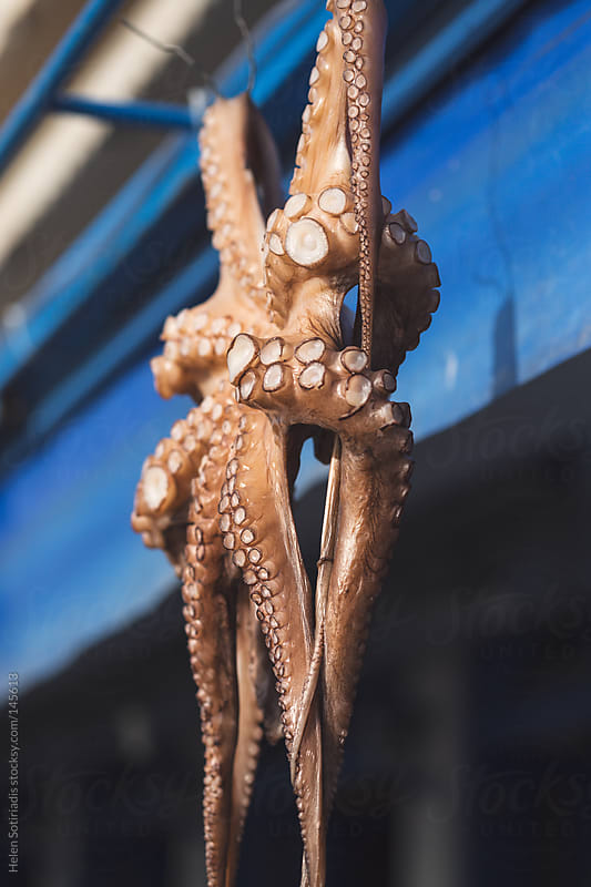 Octopus Hanging in a Restaurant by Helen Sotiriadis for Stocksy United