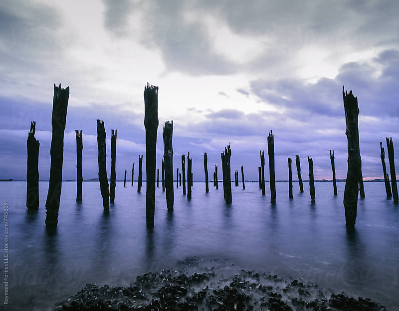 Dock Pilings Boston Harbor by Raymond Forbes LLC for Stocksy United