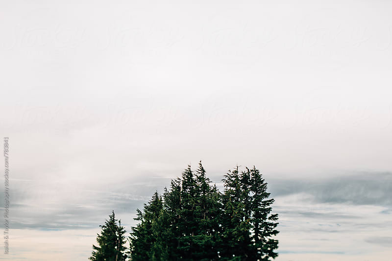 Treetops with cloudy sky by Isaiah & Taylor Photography for Stocksy United