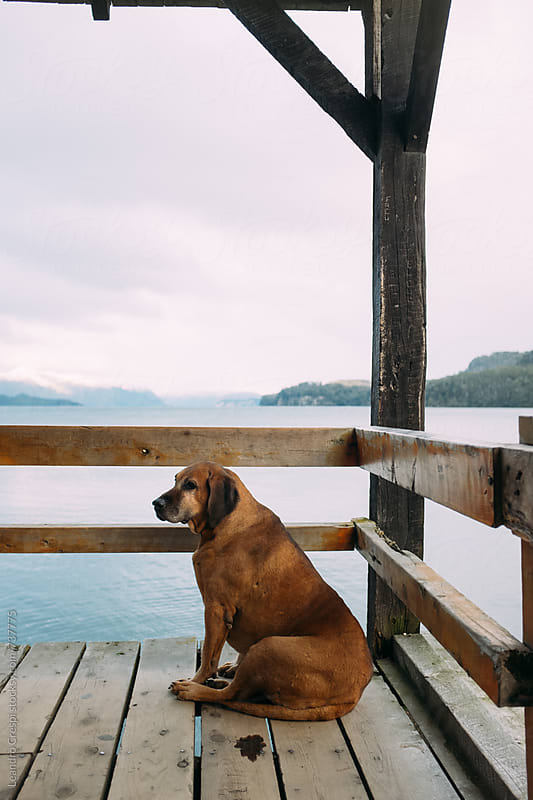 A waiting dog in a lake pier at Patagonia by Leandro Crespi for Stocksy United