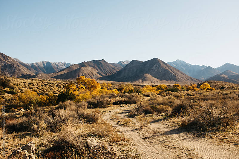 rural California town beauty by Jesse Morrow for Stocksy United