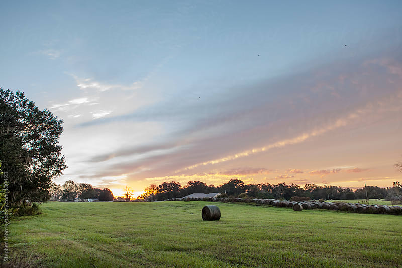 Hayfield at dawn by Stephen Morris for Stocksy United