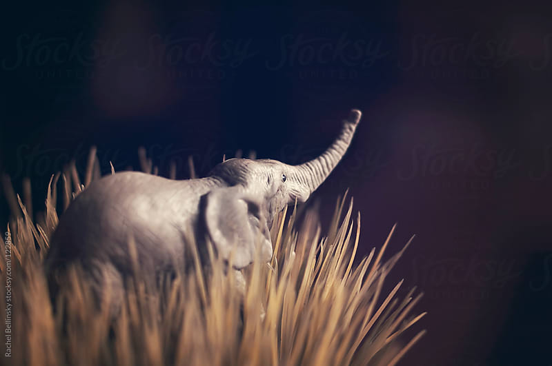A toy elephant in tall grass against a black sky by Rachel Bellinsky for Stocksy United