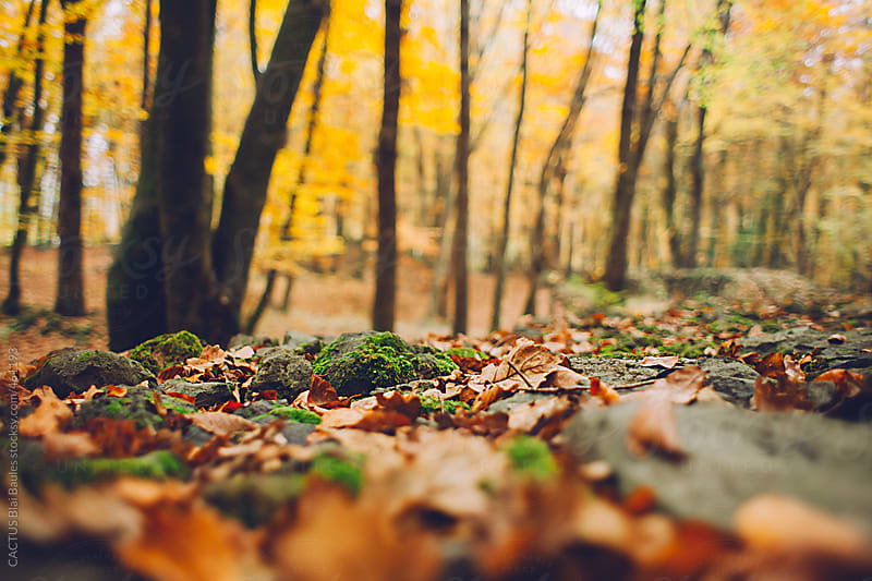 Autumn scene in the forest. by CACTUS Blai Baules for Stocksy United