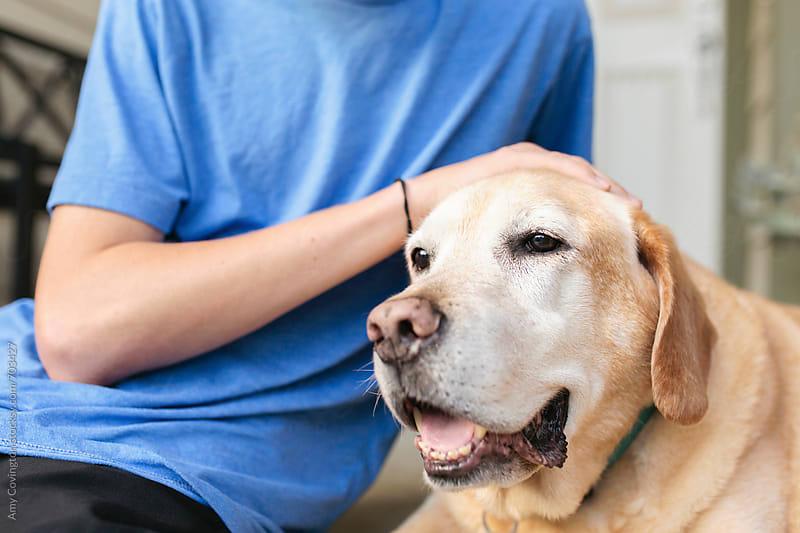 Senior dog  by Amy Covington for Stocksy United