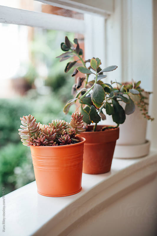 Succulent Plants on Windowsill by Kara Riley for Stocksy United