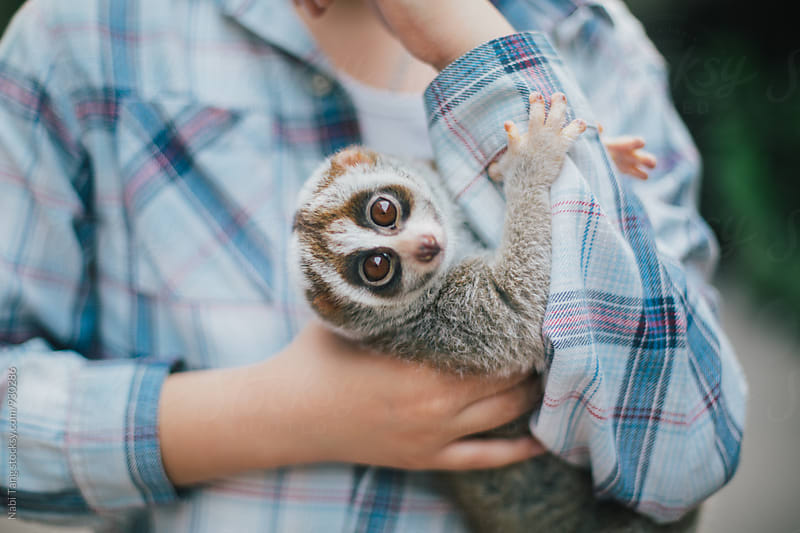 A boy holding slow loris by Nabi Tang for Stocksy United