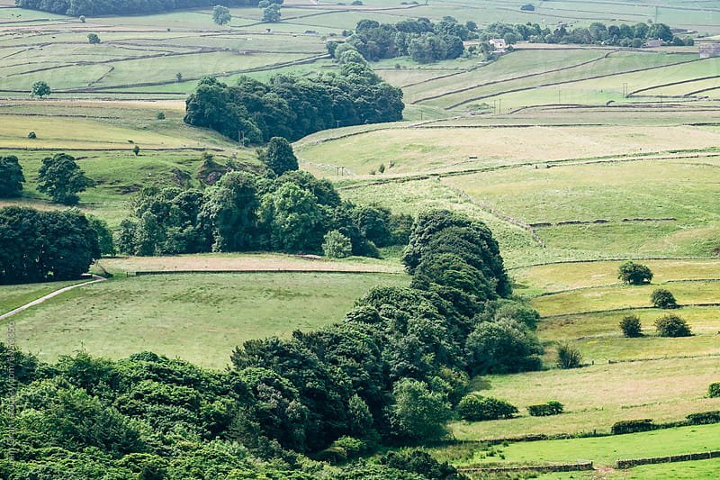 Rows of trees and fresh green fields in the valley. Derbyshire, UK. by Liam Grant for Stocksy United