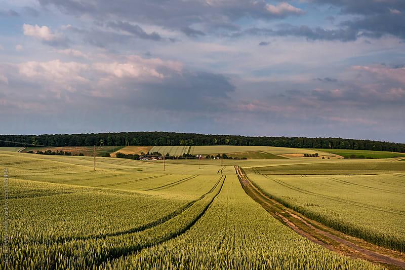 Corn fields in the Kraigau region by Andreas Wonisch for Stocksy United