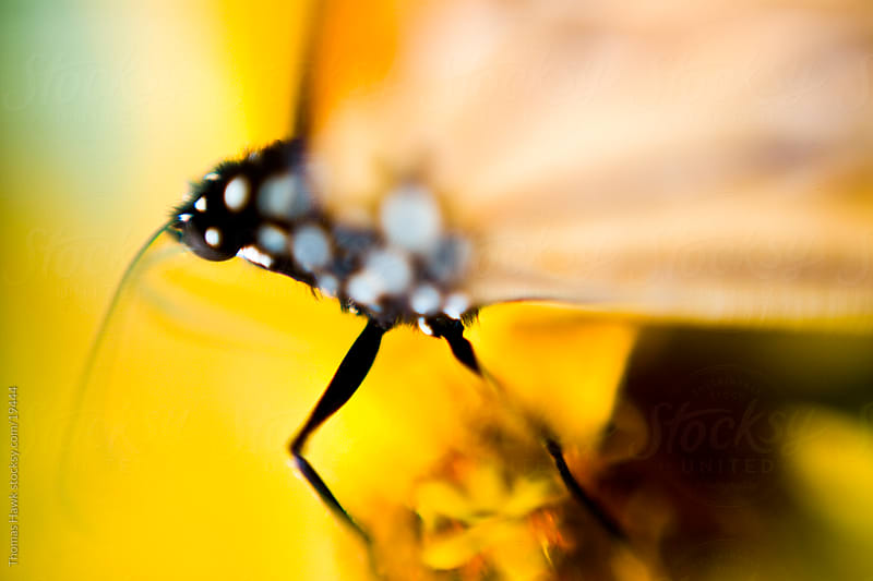 butterfly by Thomas Hawk for Stocksy United