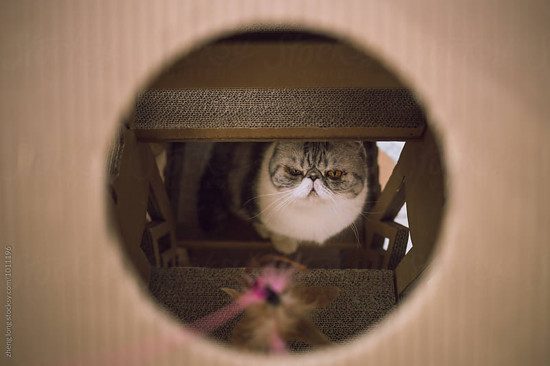 cat in the room by zheng long for Stocksy United