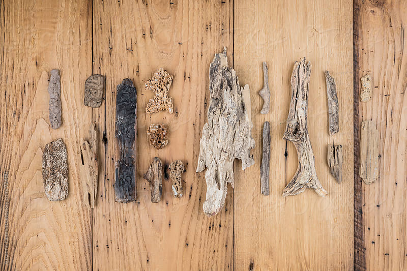 Collection of Different Driftwood from the Ocean by suzanne clements for Stocksy United