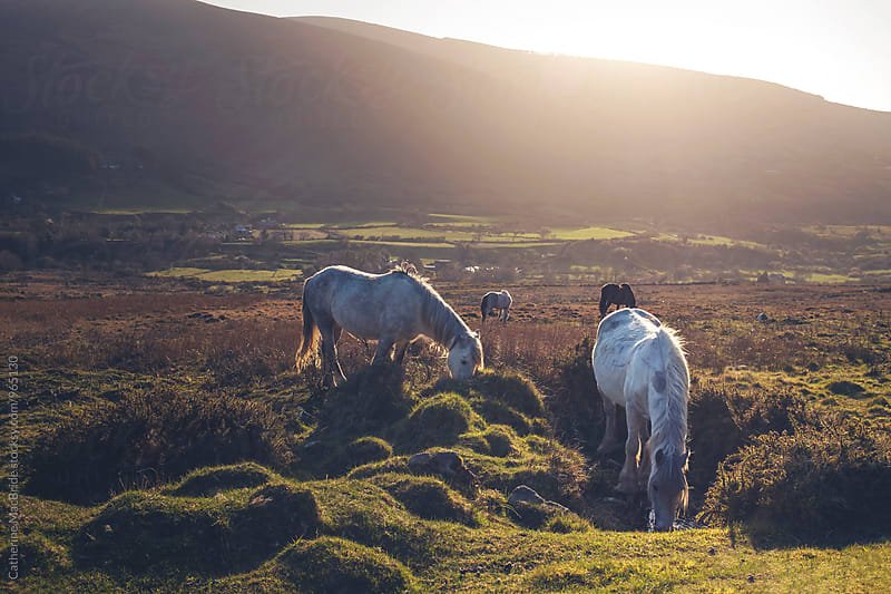 A horse to water... by Catherine MacBride for Stocksy United