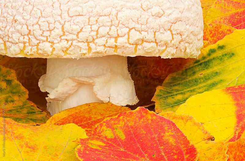 Mushroom and Witch Hazel, closeup by Mark Windom for Stocksy United