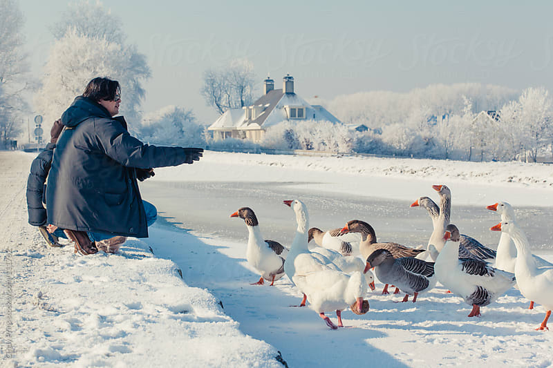 Father and son feeding bread to geese standing on ice in the winter by Cindy Prins for Stocksy United