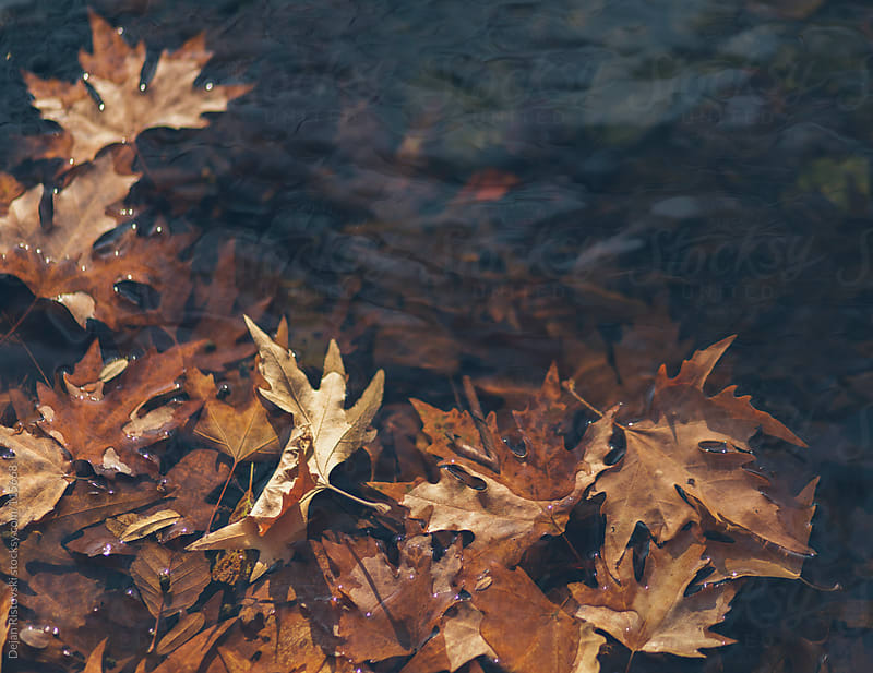 Fallen leafs by Dejan Ristovski for Stocksy United
